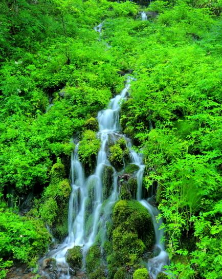 植生豊かな山肌に苔むす滝