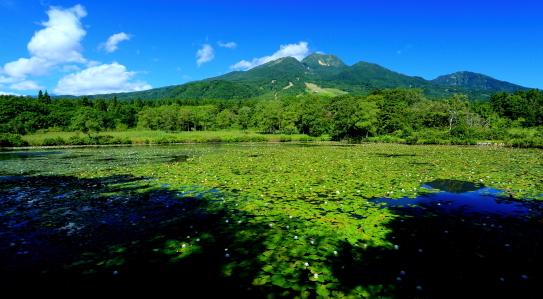 コウホネ覆うイモリ池と妙高山
