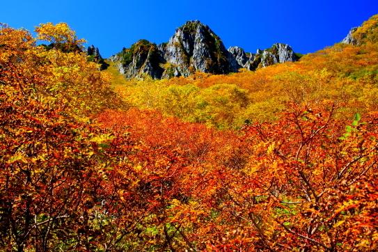 七竈と岳樺の紅葉彩る宝剣岳