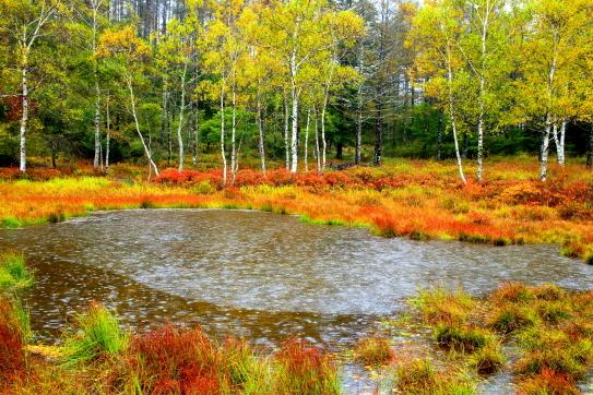 降雨の中の池の平秋景