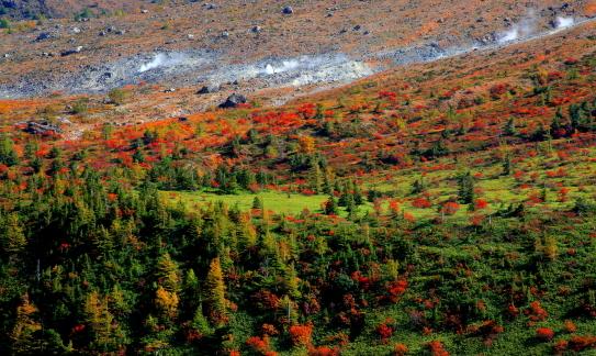 噴煙立ち昇る白根山の紅葉