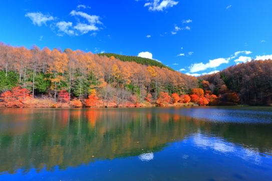 蓼ノ海を彩る紅葉