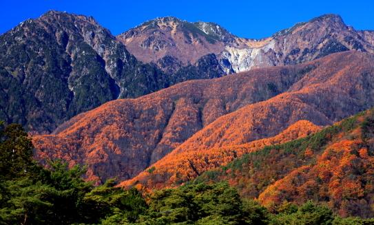 黄葉のカラマツの森に浮かぶ仙涯嶺・南駒ヶ岳・田切岳