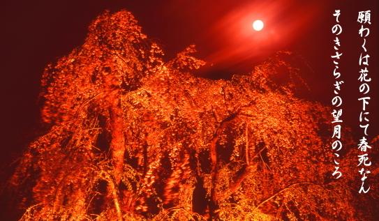 09-西行・願わくは花の下にて春死なんそのきさらぎの望月のころ