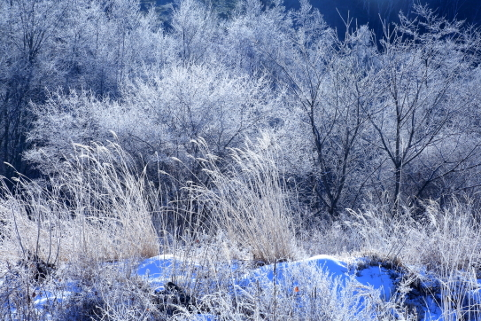 木々に霧氷の朝