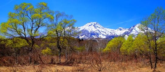 萌える若葉と残雪輝く妙高山