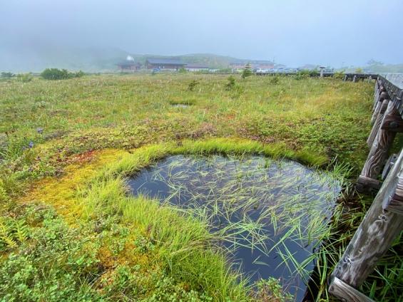 球実栗繁茂する池塘