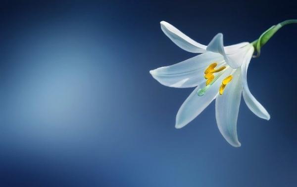 イメージ 花