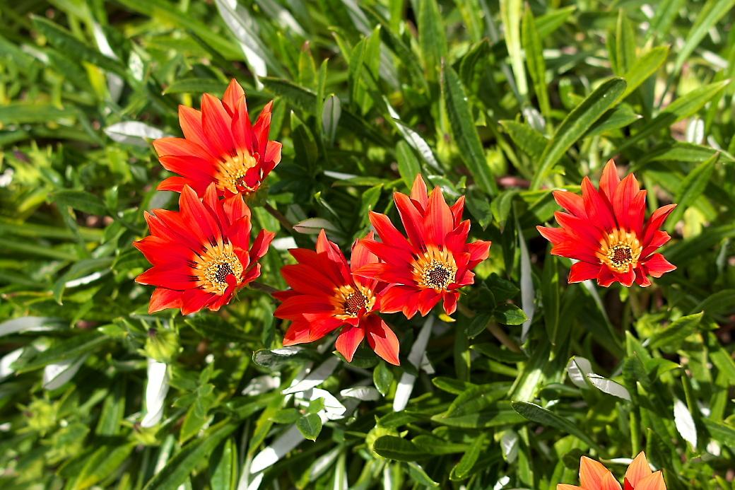 途中の民家の庭先に咲いていた花_1