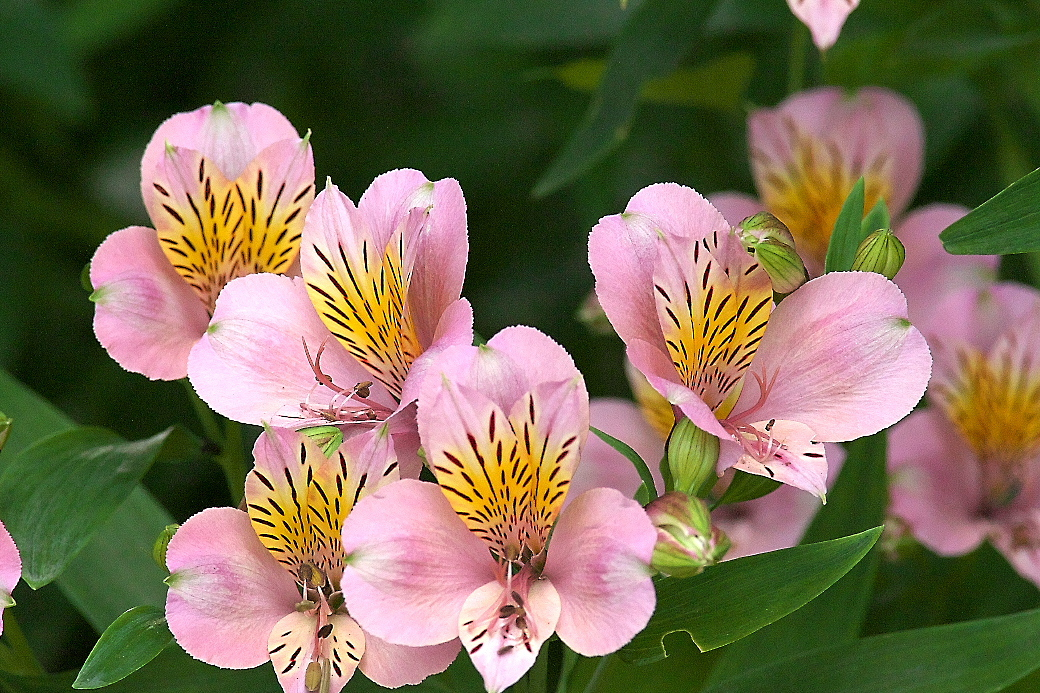 花さんたち_1