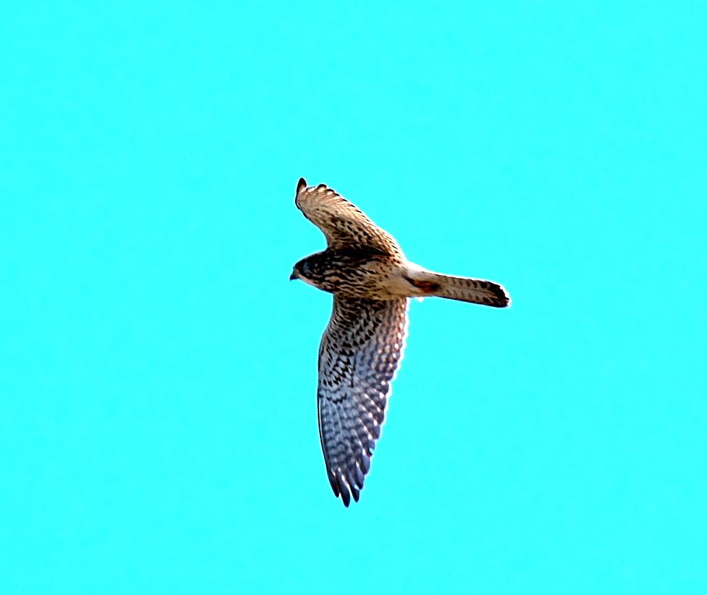 飛翔シーン_2