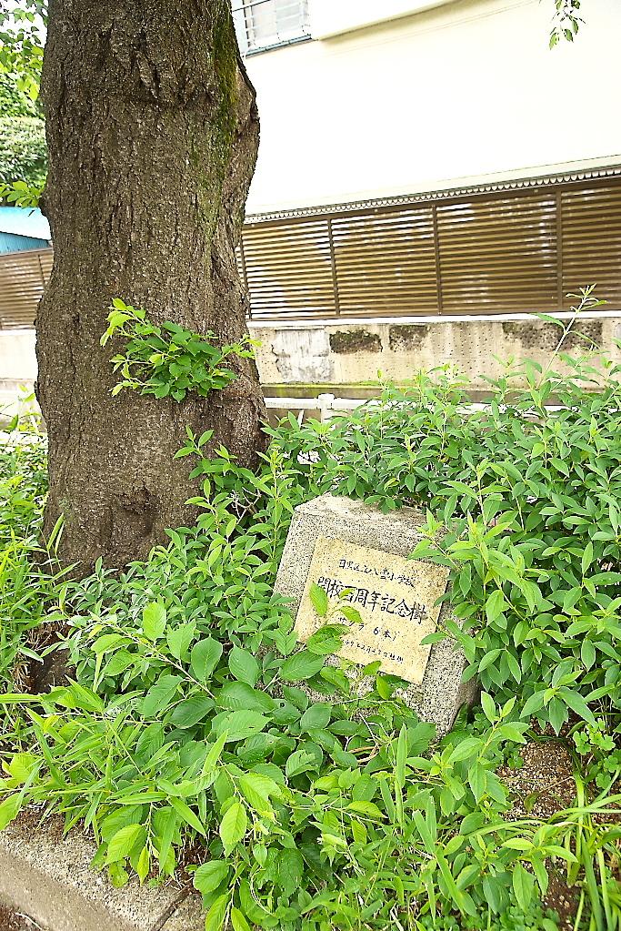 八雲小学校の記念植樹