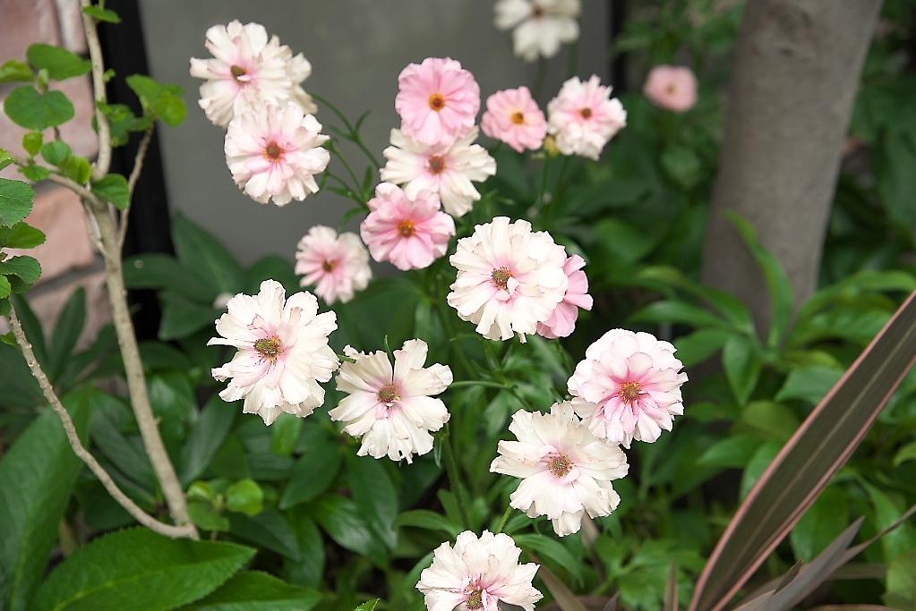 道端の花_2
