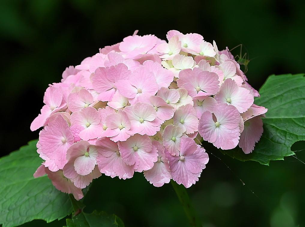 花さんたち_5