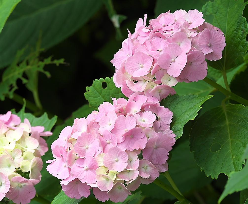 花さんたち_8