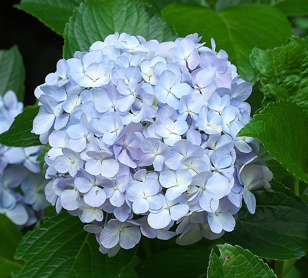 花さんたち_9