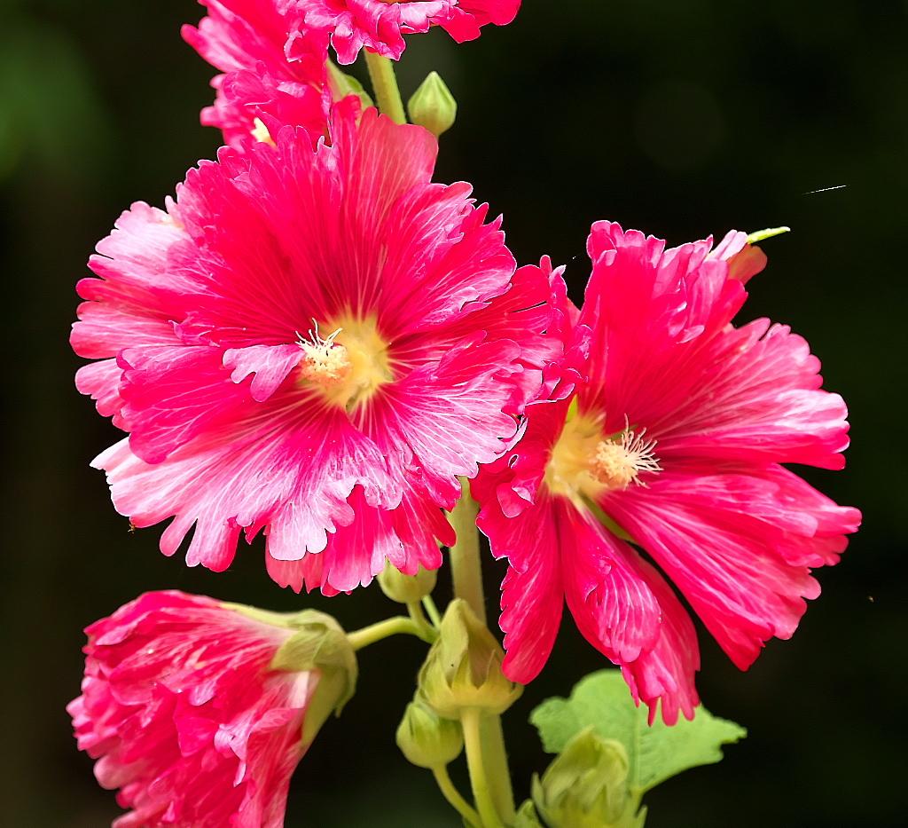 花さんたち_10