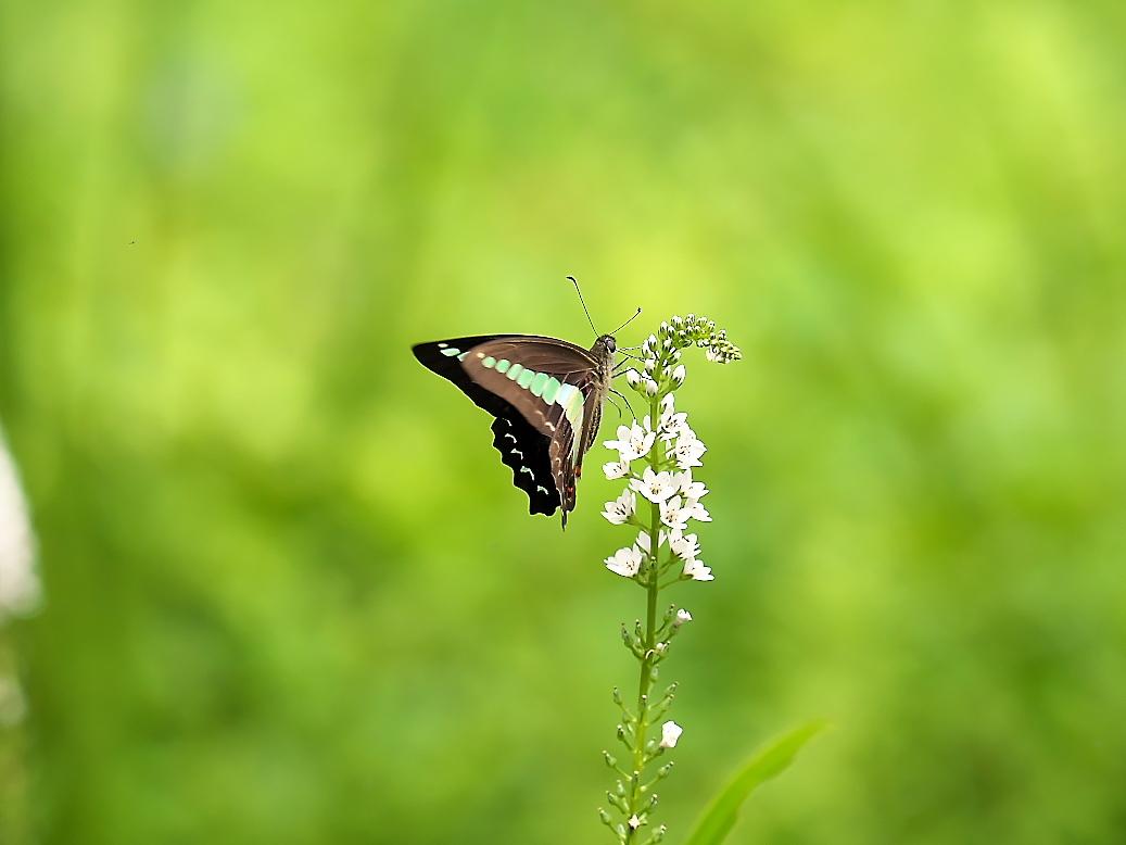 蝶が絡む様子_1