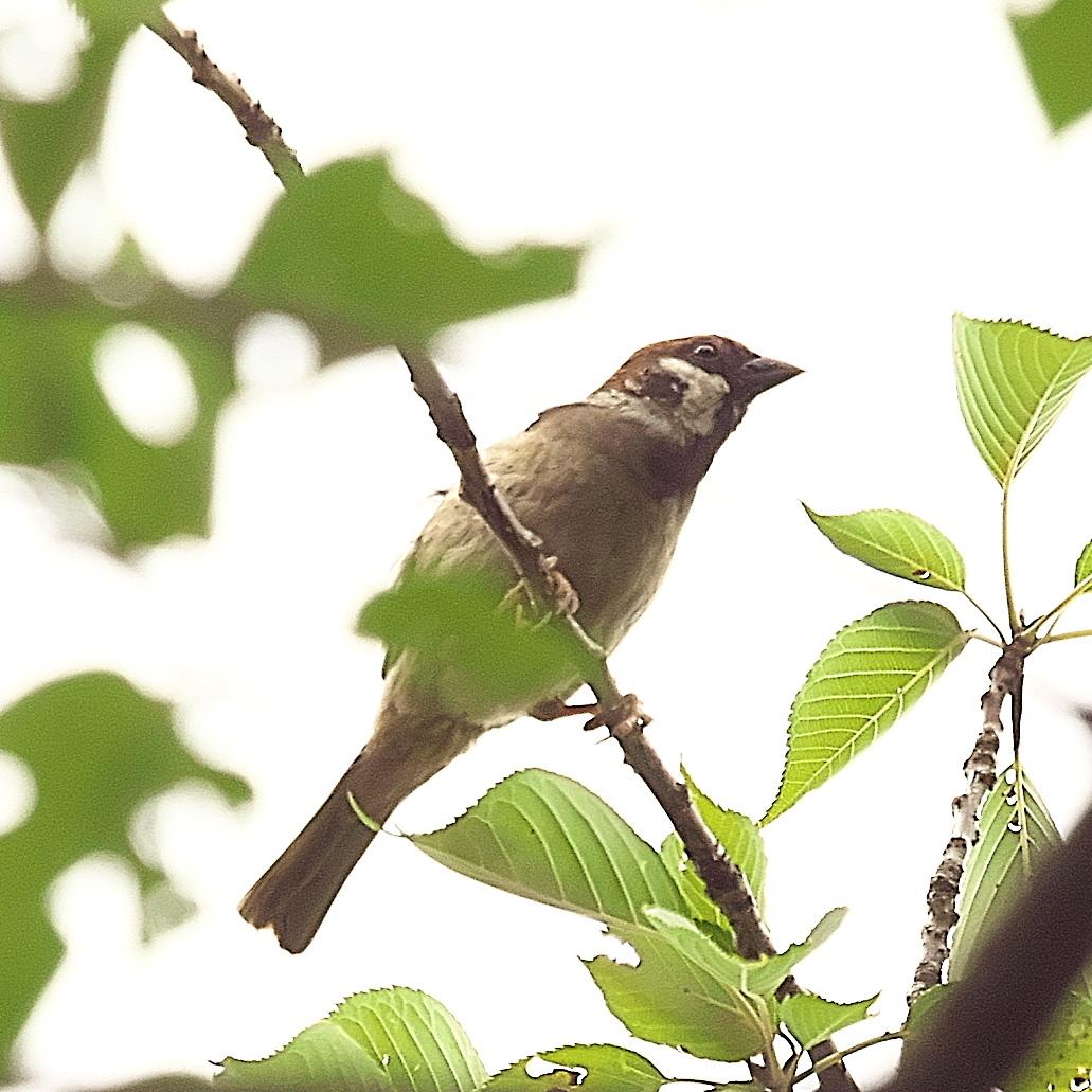 何とか撮ることができた野鳥_2