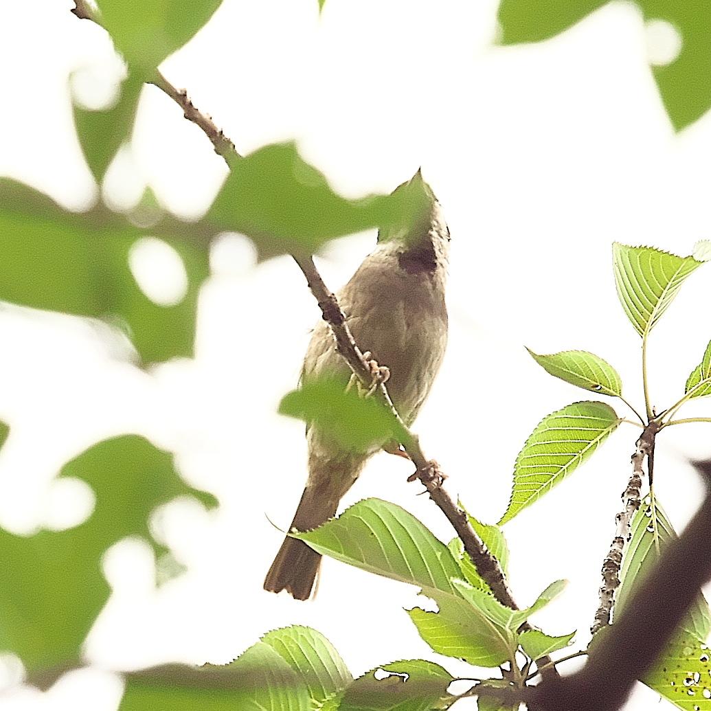 何とか撮ることができた野鳥_4