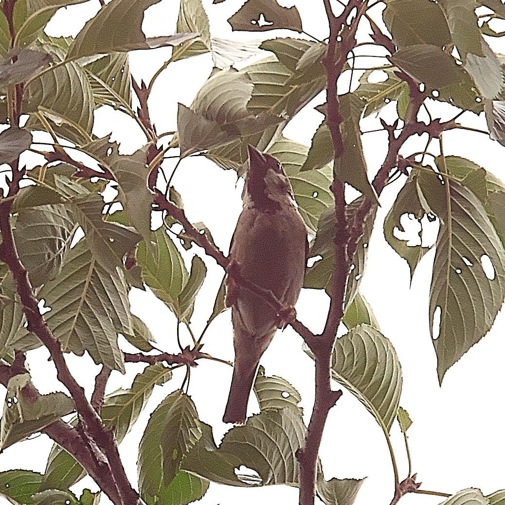 何とか撮ることができた野鳥_8