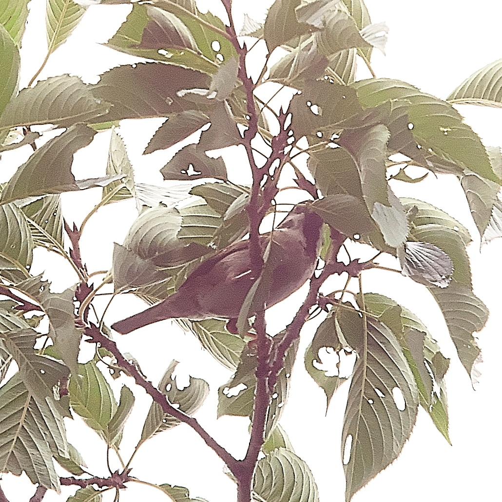 何とか撮ることができた野鳥_9