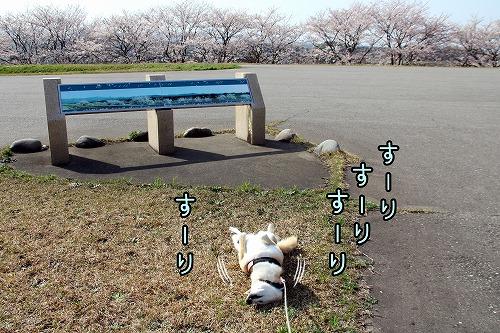 s-1sakura210412-IMG_1940