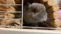 201218実家で夕食をいただき、ウサギに挨拶