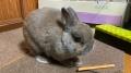 201231年末もウサギにご挨拶