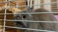 210129ウサギにご挨拶