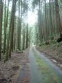 200404ウエット気味の杉木立を上る