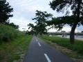 200919武庫川の松並木と自転車道