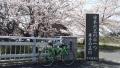 200404国道24号線沿い玉川の桜