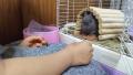 200627実家でウサギと遊ぶ