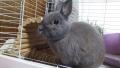 200724ウサギに無事帰宅の挨拶