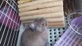 200830ウサギの月例診察から戻る