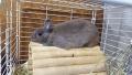 200918相変わらずウサギはリラックス