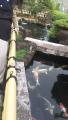 201101鯉の池の前で少し休憩