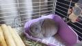 201101ウサギものんびり