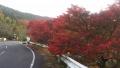 201114紅葉を見ながら、ゆっくりと上る