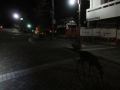 201114猿沢池の夜の鹿