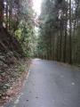201123濡れた木立の急勾配を下る
