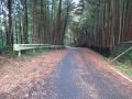 201123ウエット路面に枯れ枝や落ち葉