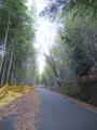 210103井手から多賀へ竹やぶのアップダウン