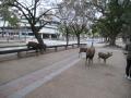 210130奈良の鹿に挨拶