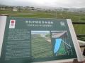 210403木津川河川敷の茶畑の紹介