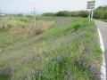 210424自動車道土手の紫の花