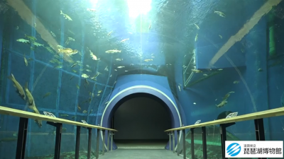 琵琶湖博物館の公式動画「トンネル水槽をゆったり泳ぐ魚たち」