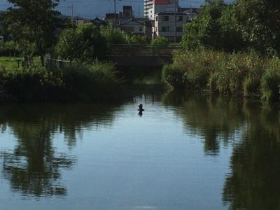 カヤ池で泳ぐ人