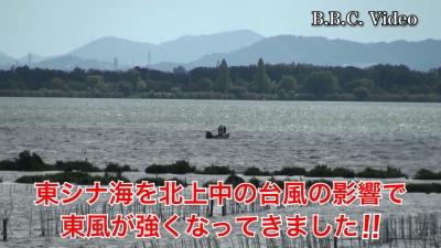 台風9号が東シナ海を北上中!! 東風が強くなった琵琶湖南湖(YouTubeムービー)